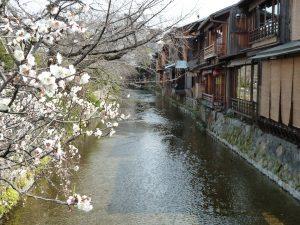 lesley-downer-japanese-blossom
